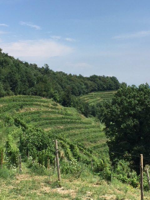 Terrazze di Montevecchia - Tabaccheria Nava - Lecco