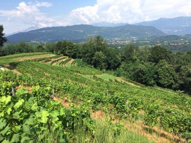 Le Terrazze di Montevecchia raccontate da…